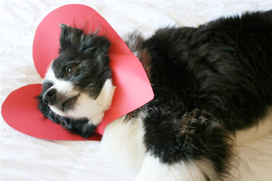 DIY Doggie Valentine | Pretty Fluffy