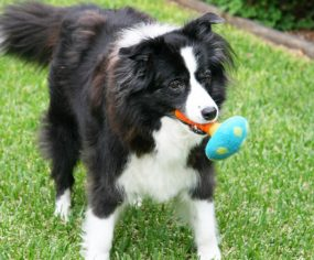 Handmade Wool Dog Toys Review | Pretty Fluffy
