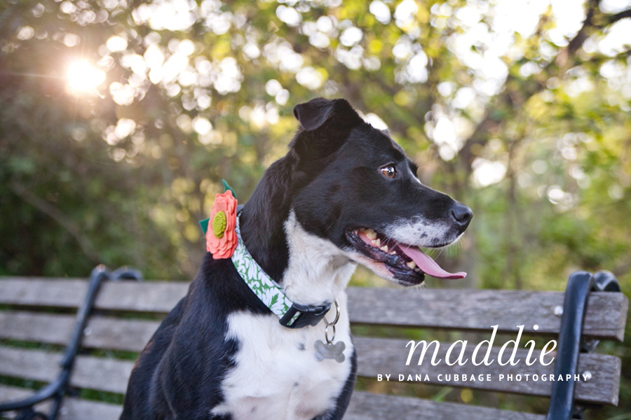 Maddie the Border Collie by Dana Cubbage Photography | Pretty Fluffy