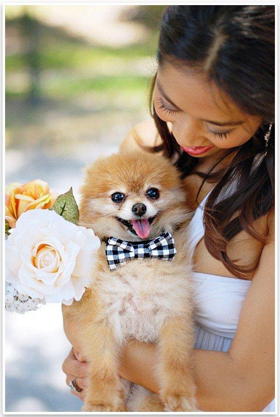 No Sew Doggie Bow Tie | Pretty Fluffy 2