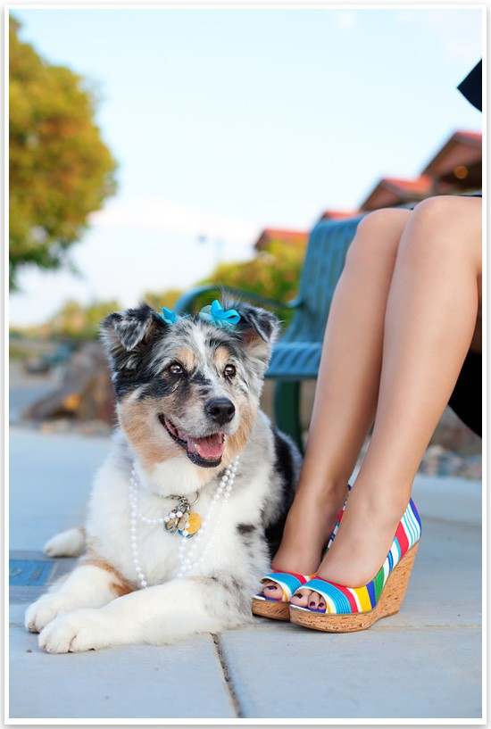 For the Love of Shoes & Dogs by Missy Moo Studio | Pretty Fluffy 3