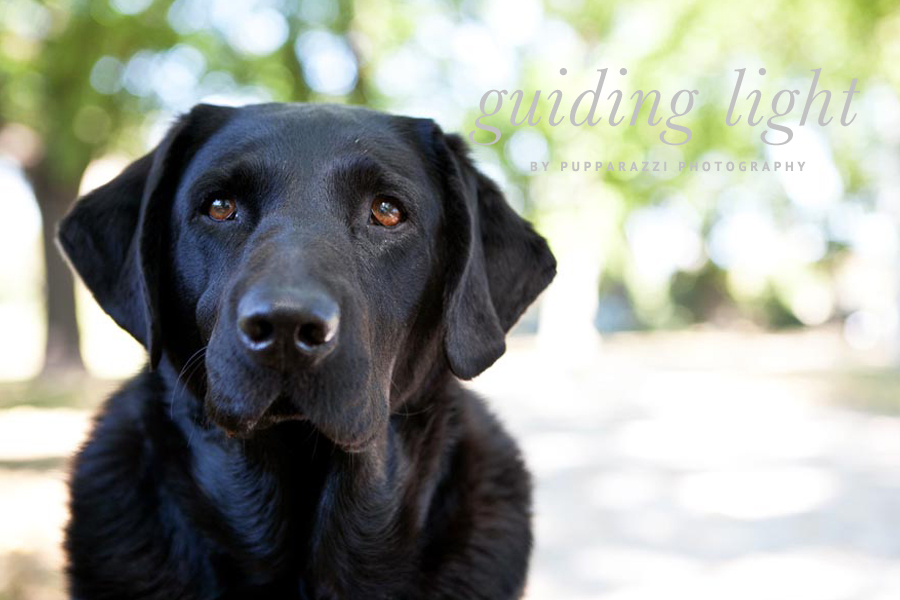 Retired Guide Dogs by Pupparazzi Pet Photography | Pretty Fluffy
