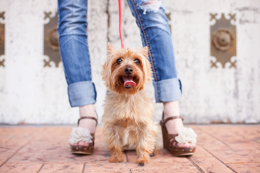 For the Love of Shoes and Dogs by Missy Moo Studio | Pretty Fluffy