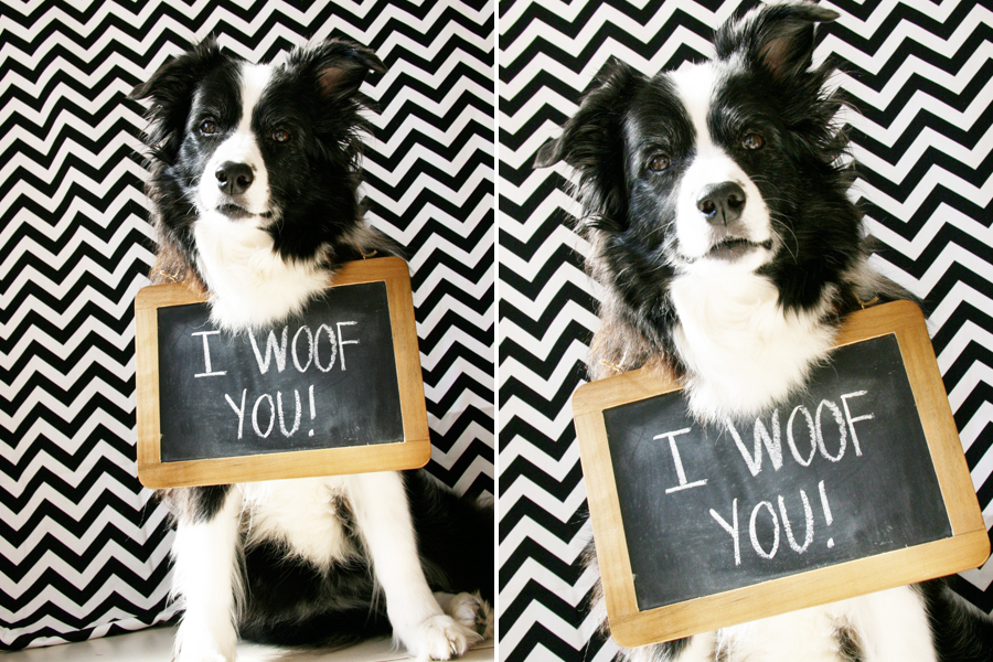 Pictures With Your Dog Ideas