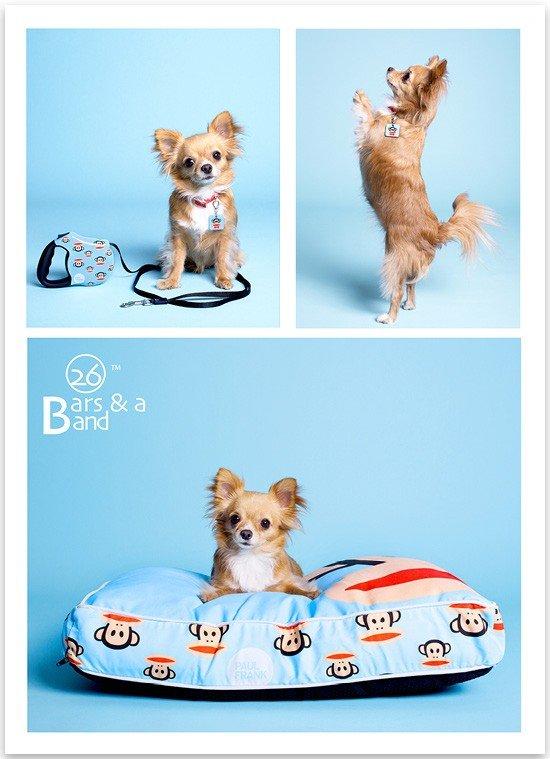 Paul Frank Pet Products