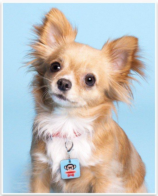 Paul Frank Dog Accessories