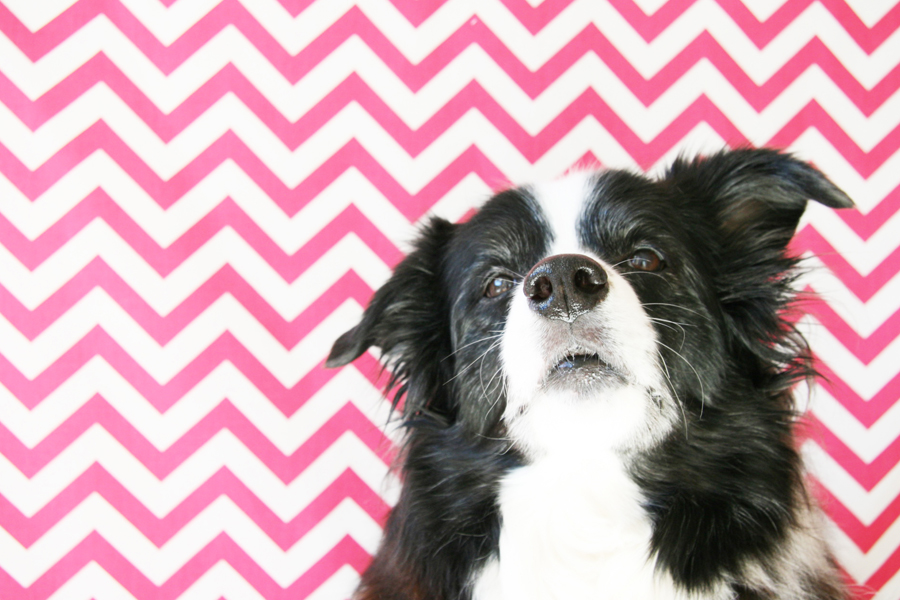 5 Home Pet Photography Ideas
