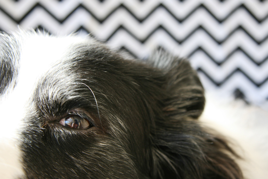 Top Tips for Home Pet Photography   Pretty Fluffy