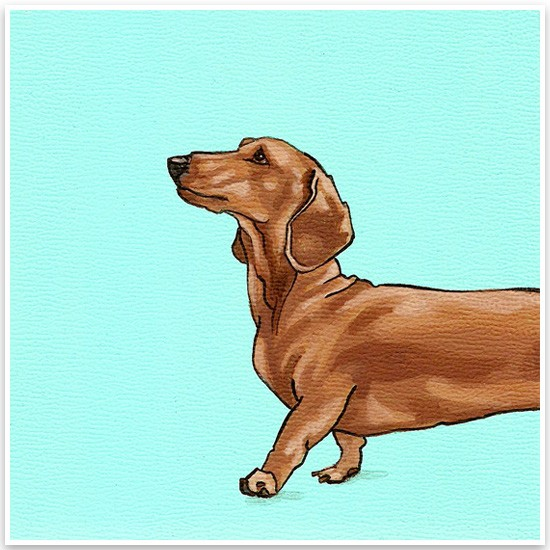 Yellow Brick Home Pet Portraits Daschund