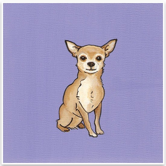 Yellow Brick Home Pet Portraits Chihuahua