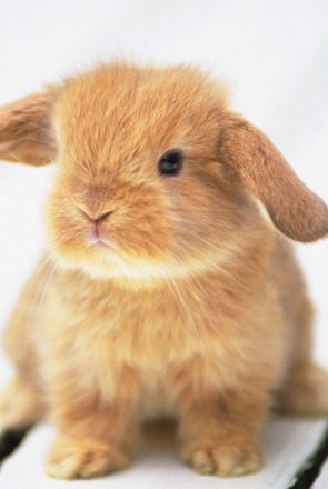 Top 5 Cruelty Free Body Scrubs | Pretty Fluffy