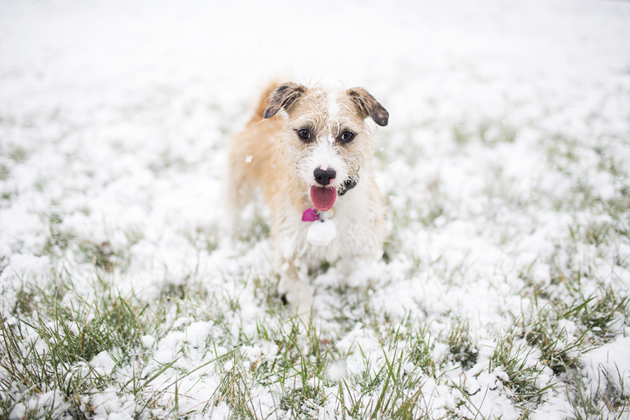 Snow Dogs by McGraw Photography | Pretty Fluffy