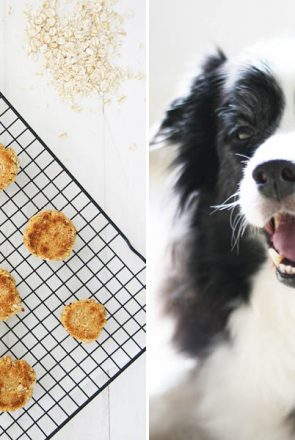 Anzac Biscuit Dog Treat Recipe   Anzac Biscuits are a hundred year old tradition in Australia. Make your own ANZAC biscuit dog treat recipe with our free tutorial - grab it here.