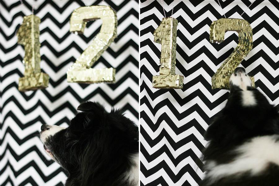 Black and White Dog Birthday Party   Pretty Fluffy