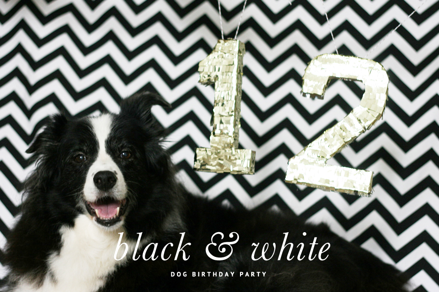 Black and White Dog Birthday Party with Dog Treat Pinata   Pretty Fluffy