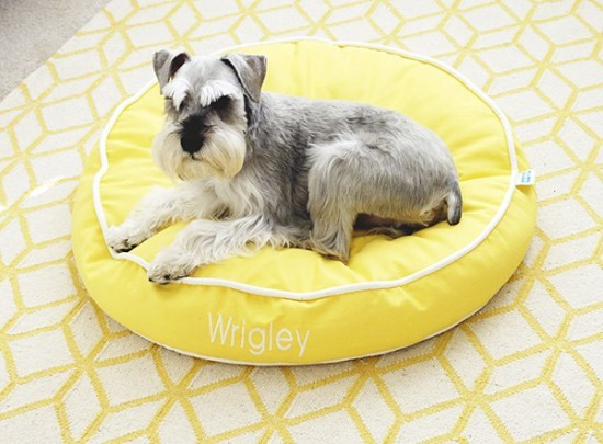 Wrigley - Dogs of the Blogs | Dog Milk | Pretty Fluffy