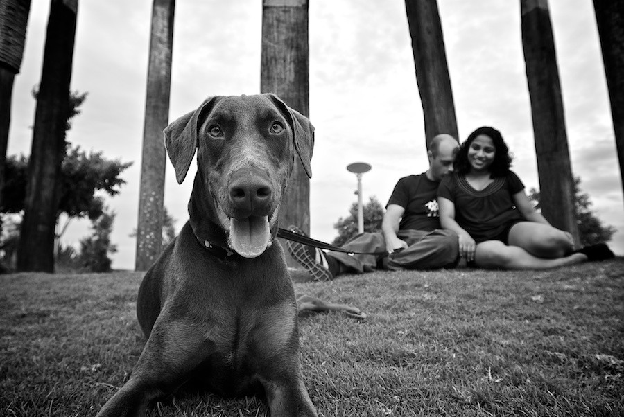 Mika the Doberman by Wet Nose Fotos   Pretty Fluffy
