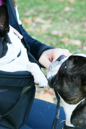 Fundle Pet Sling Review | Pretty Fluffy