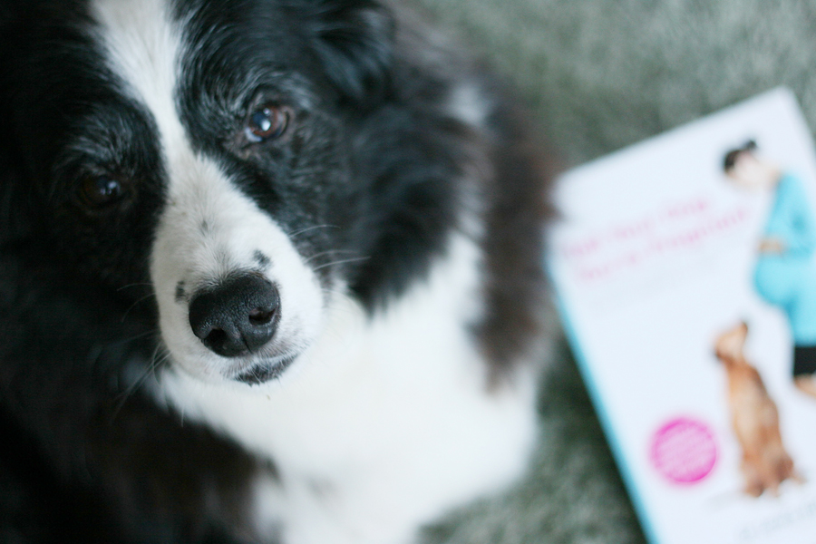 How to Tell Your Dog You're Pregnant | Pretty Fluffy