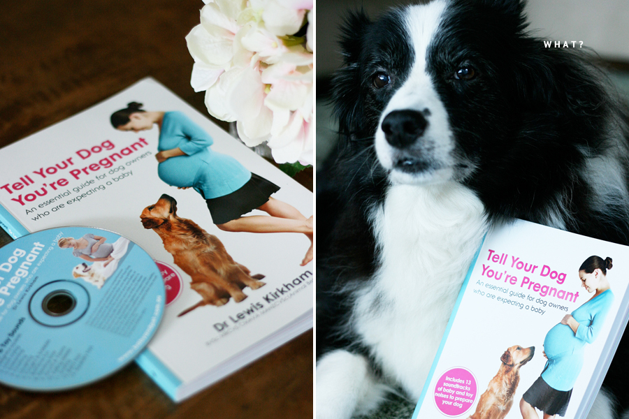 Tell Your Dog You're Pregnant Review | Pretty Fluffy