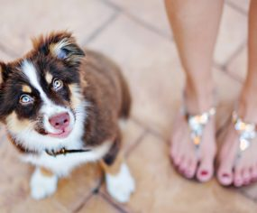 Puppy Proofing your home | Pretty Fluffy