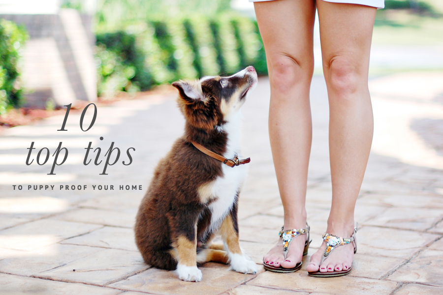 10 Tips Puppy Proof Your Home | Pretty Fluffy