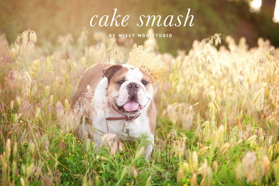 Dog Birthday Cake Smash By Missy Moo Studio