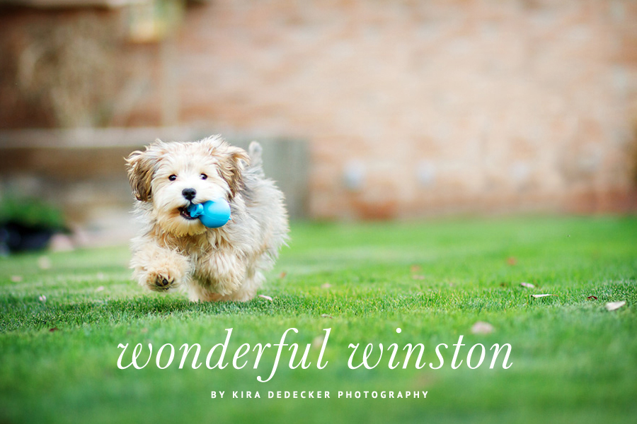 Winston the Rescue Puppy by Kira DeDecker Photography | Pretty Fluffy