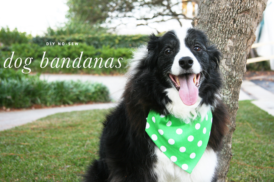 DIY No-Sew Dog Bandanas | Pretty Fluffy