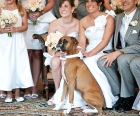 Dogs at Weddings | Pretty Fluffy