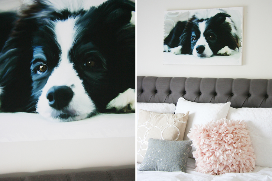 Hand painted Pet Portraits | Pretty Fluffy