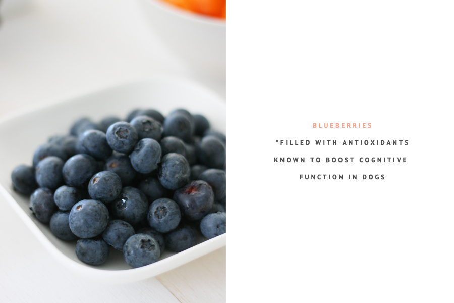 Blueberries - Superfoods for Dogs | Pretty Fluffy