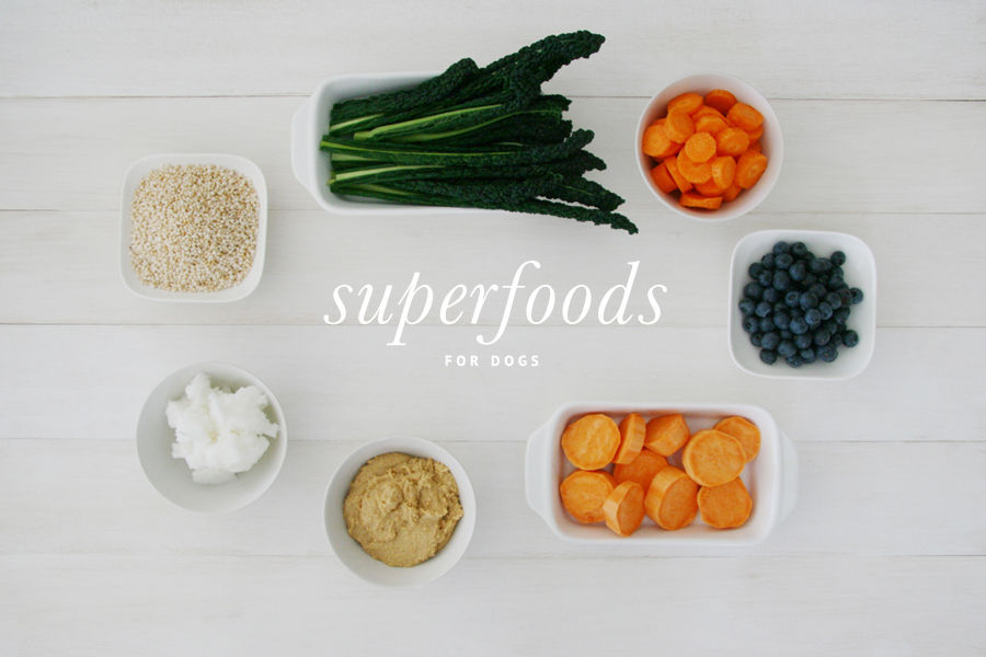 Superfoods for Dogs | Pretty Fluffy