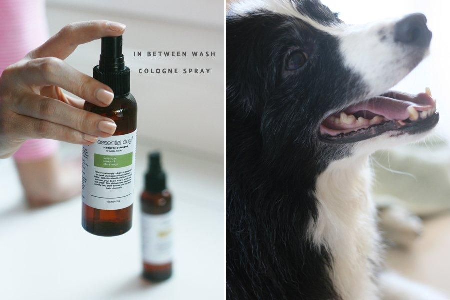Essential Dog Aromatherapy Dog Shampoo & Grooming Range | Pretty Fluffy