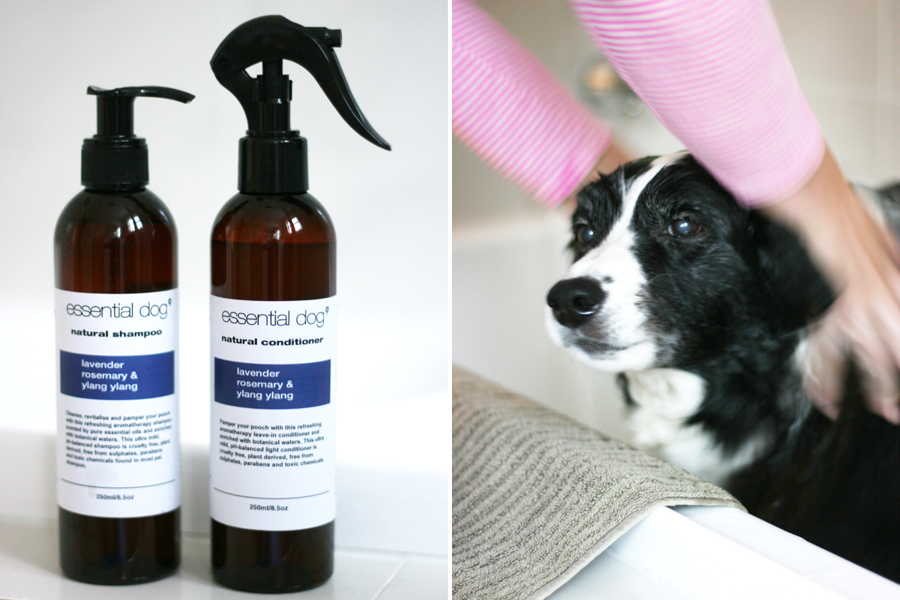 All natural dog shampoos that treat a variety of dog skin conditions, naturally. From dandruff to hot spots in dogs we have a specialty shampoo to treat all itchy dogs.