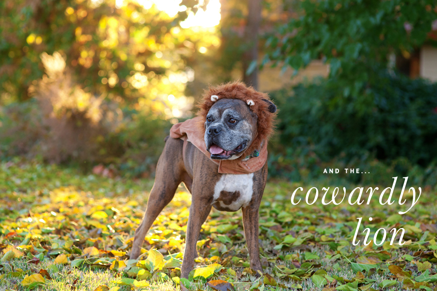 Halloween Wizard of Oz Costume - Cowardly Lion