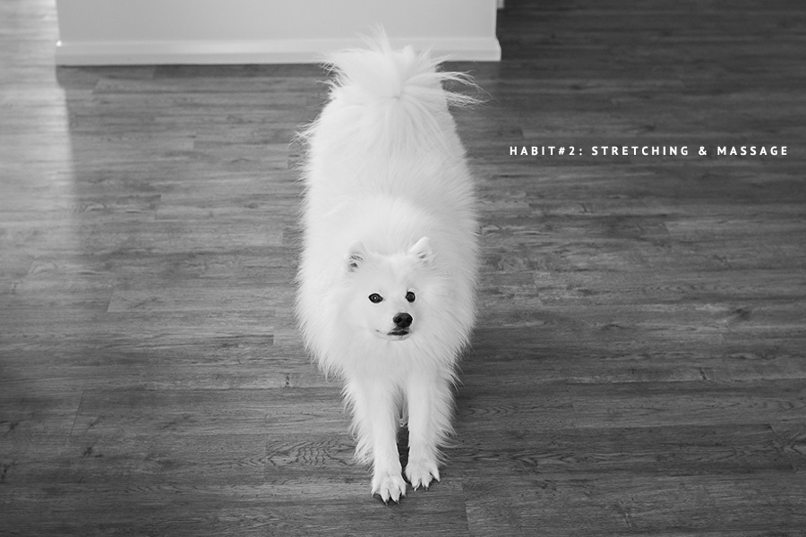 HEALTHY HABITS: To massage your pooch, simply apply slight pressure with your palms as you would normally pat your dog. Experiment with circular motions and movements, making note of what your dog enjoys and spots where they may be holding tension. (C) Photo by Akemi Photography