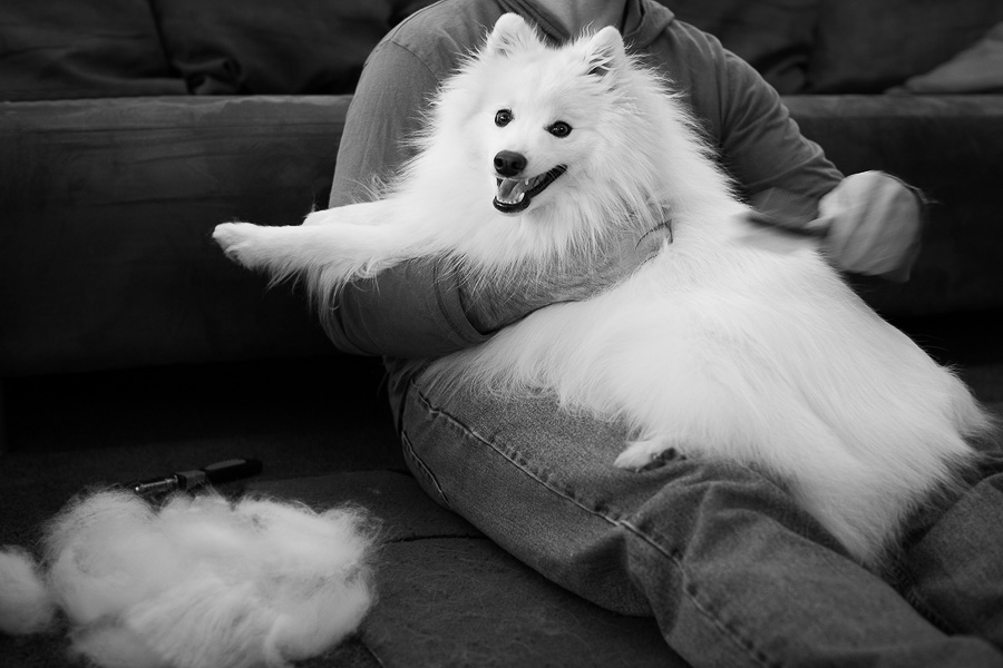 Brushing your dog daily increases the bond between owner and pet. (C) Photo by Akemi Photography