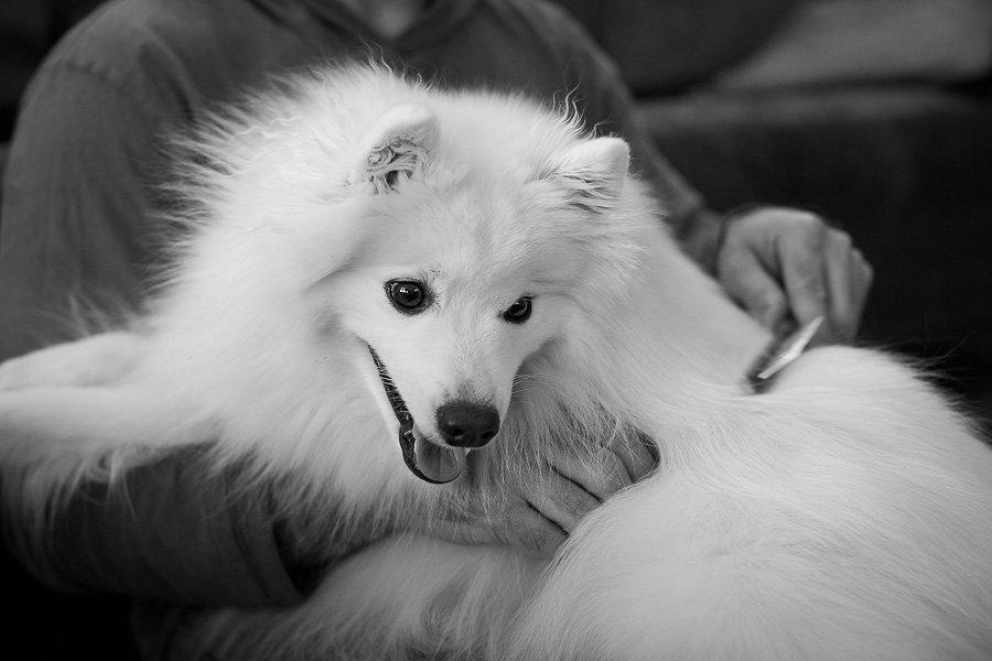 3 Habits You & Your Dog Should Start Today: Body brushing (C) Photo by Akemi Photography