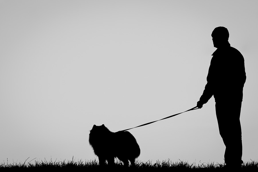 3 Habits You & Your Dog Should Start Today: Walking (C) Photo by Akemi Photography