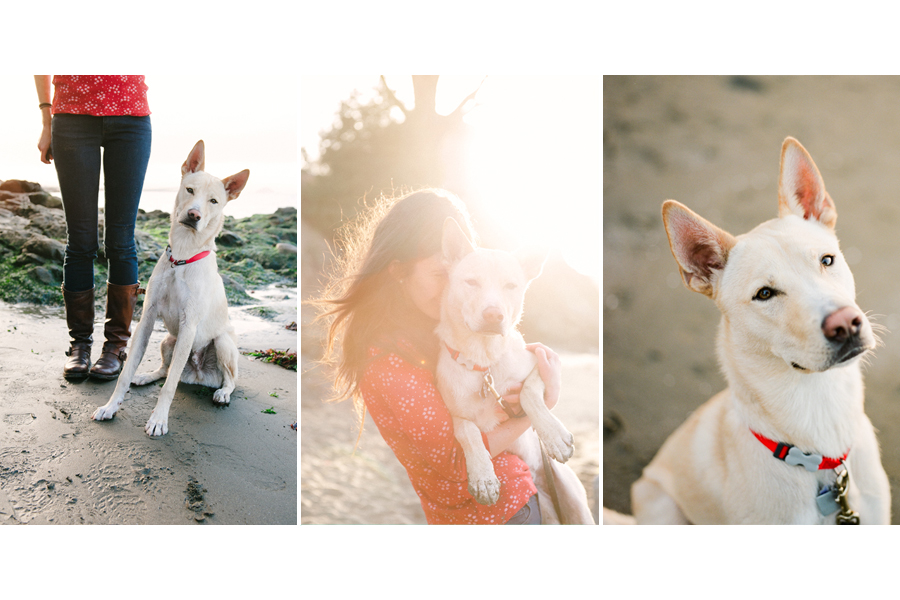 Juneau the Husky by Photo Lab Pet Photography | Pretty Fluffy