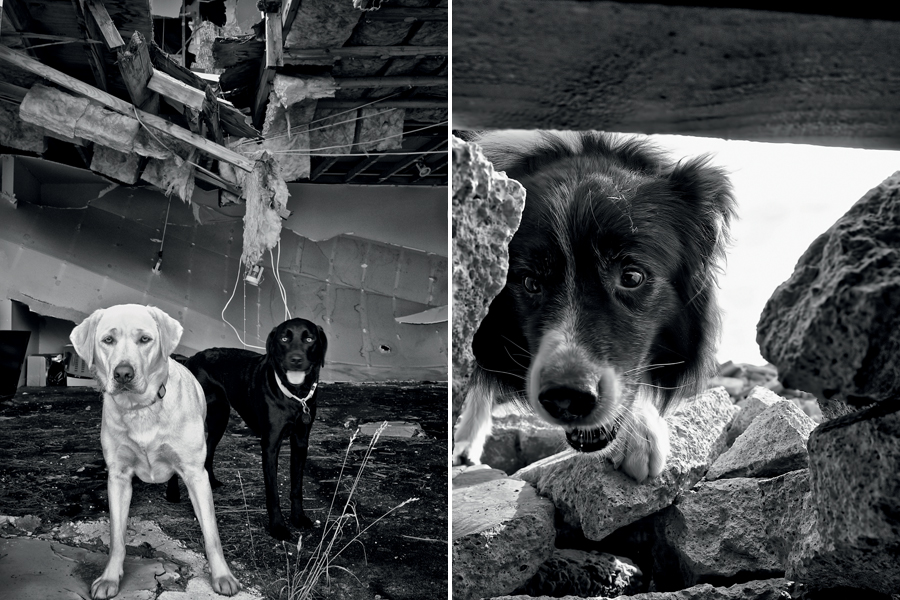 Quake Dogs - Dog Heroes from NZ's Earthquake