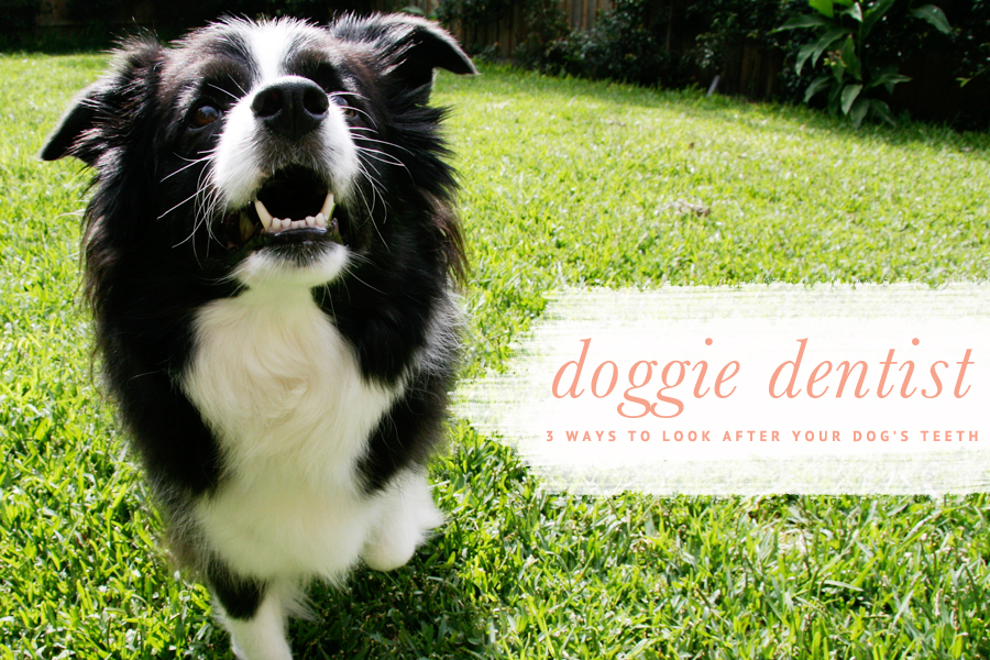 Dog Dental Care: 3 Ways to Look After Your Dog's Teeth   Pretty Fluffy