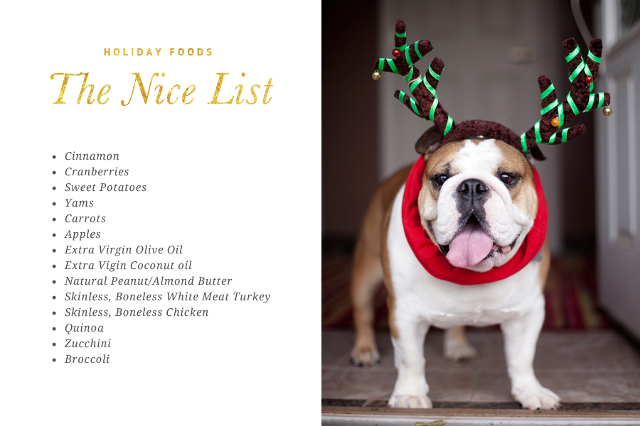 The ultimate list of food safe for dogs at Christmas. Our naughty and nice list will have your dog enjoying the festivities safely!