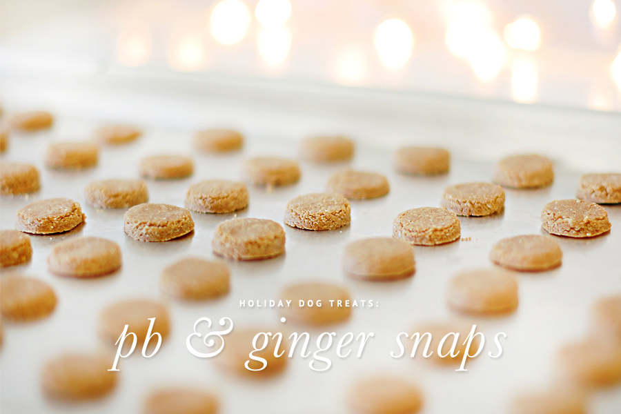Holiday Dog Treats - PB & Ginger Snaps Recipe - These holiday dog treats are healthy, yummy and easy to make. Grab the recipe here and make your own treats for your dog and their friends these holidays.