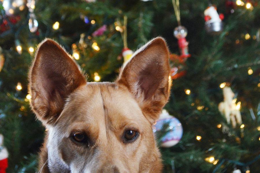 5 Top Tips for Traveling with Dogs during the Holidays