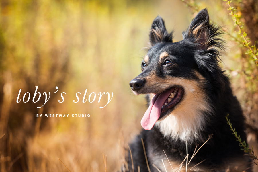 Toby the Rescue Pup by Westway Studio | Pretty Fluffy