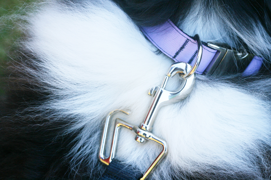 ThunderLeash Review | No Pull Dog Lead Harness | Pretty Fluffy