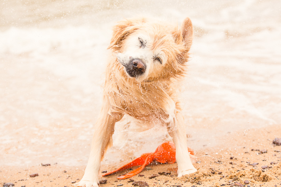 5 Ideas for Great Summer Dog Photos | Pretty Fluffy