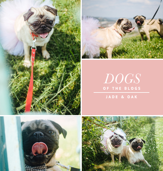 Dogs of the Blogs - Jade and Oak | Pretty Fluffy
